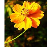Beautiful yellow flower Photographic Print