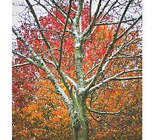 Snow Falls Photographic Print