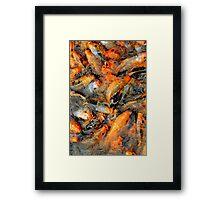 Fish fight Framed Print