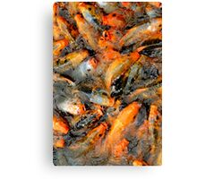 Fish fight Canvas Print