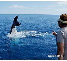 Whale Calendar 1 July Photographic Print