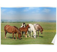 horses and foal in pasture Poster