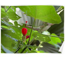 Little lizard smelling flower bud Poster