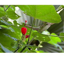 Little lizard smelling flower bud Photographic Print