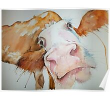Nosey Cow! Poster
