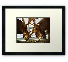 Moose Fight Framed Print
