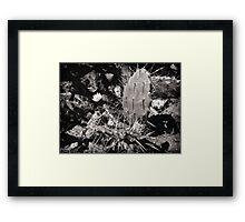 ©MS Nopalera VSIII Monochrome Framed Print