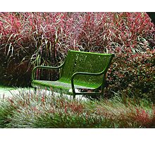 """Bench"" by Carter L. Shepard Photographic Print"