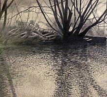 Afternoon Light, St Patrick's River by Richard Klekociuk