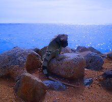 """Aruba Iguana"" by Carter L. Shepard by echoesofheaven"