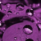 Rain Drops Purple by Joey Kuipers