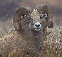Big Ram by JamesA1