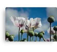 Opium Poppy Field  Canvas Print