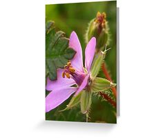 Tiny Purple Flower Greeting Card
