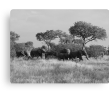 elephant crossing  Canvas Print