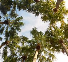 Palm Trees  Disney World Florida  by Grace314