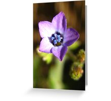 Purple Little Flower Greeting Card