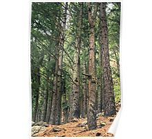 Brown Forest of trees Poster