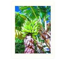 """Hawaii Bannana Tree"" by Carter L. Shepard Art Print"