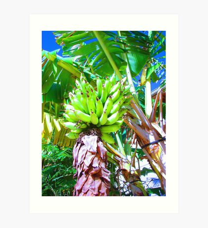 """Hawaii Bannana Tree"" by Carter L. Shepard Art Print"