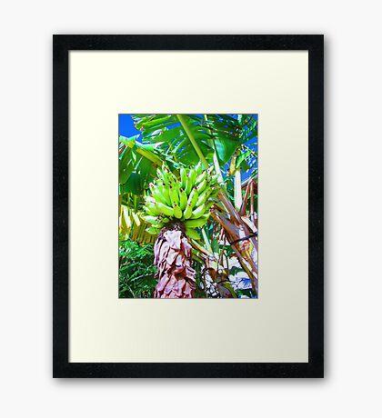 """Hawaii Bannana Tree"" by Carter L. Shepard Framed Print"