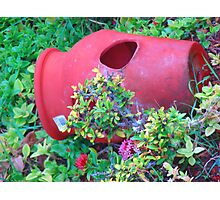 """Hawaii Flower Pot"" by Carter L. Shepard Photographic Print"