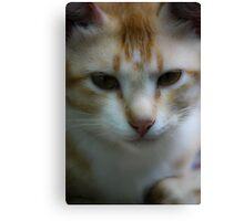 Pet cat garfield Canvas Print