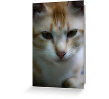 Pet cat garfield Greeting Card