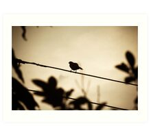 Bird on a cable at sunset Art Print