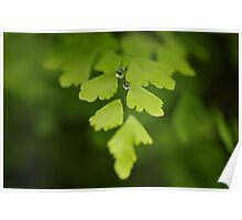 Maidenhair Magic Poster