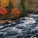 La merveille de l'automne by Cameron B