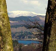 Tree-mendous View over Benderloch by Bill Lighterness