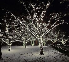 Trees in the Snow by AnnDixon