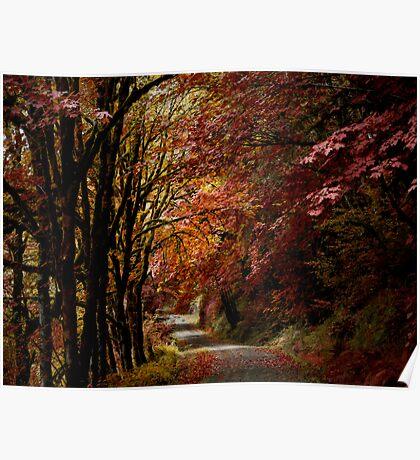 Road Of Joy ~ Fall Colors ~ Poster