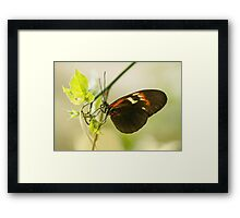 Black and red butterfly Framed Print