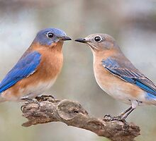 Beautiful Bluebirds by Bonnie T.  Barry