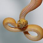 Yellow Amazon Tree Boa by serpentscales