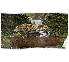 Jaguar Waterfall Poster