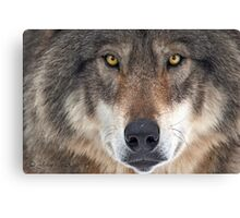 ... yes...I am a wolf-addict...  Canvas Print