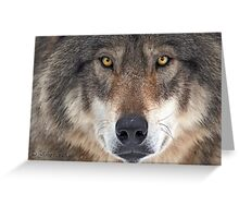 ... yes...I am a wolf-addict...  Greeting Card