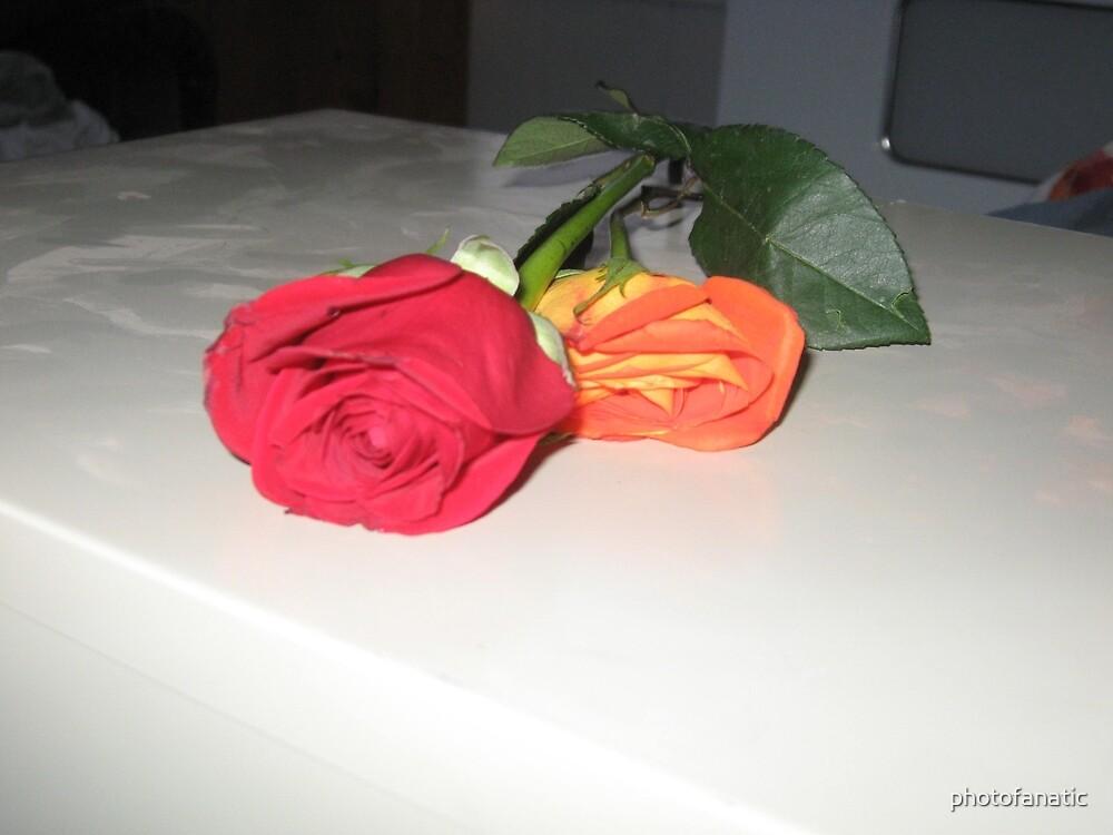 roses by photofanatic