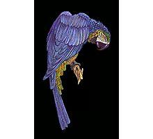 Blue Parrot Wall Art Photographic Print