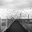 Scatter by acrichton