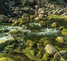 Fresh Stream by Zohaib Ali