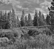 Glade Creek I (B&W) by Brenton Cooper