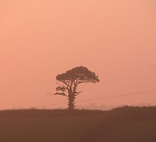 Tree by Emily Shadbolt