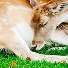 Sleeping Doe by PatiDesigns