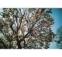Pink Tree Photographic Print