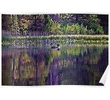 Lone Loon On Moose Lake Poster