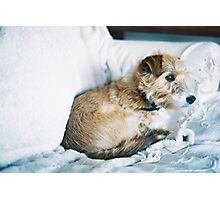 Mable Photographic Print